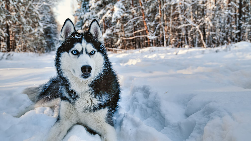 The 12 Zodiac Signs As Popular Dog Breeds