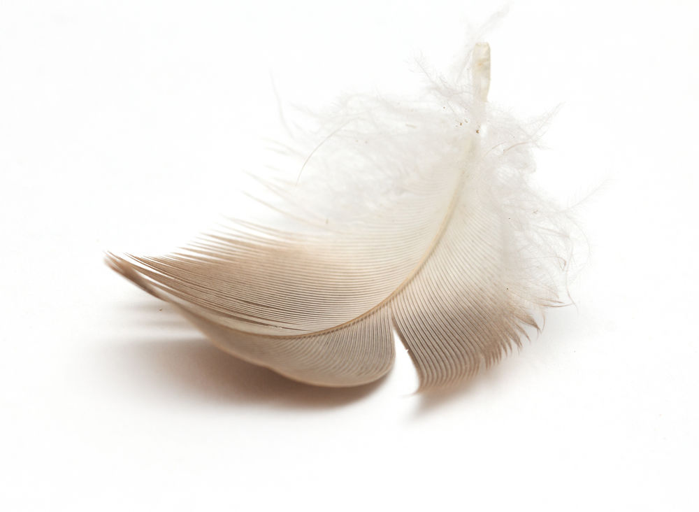 Brown and white feather meaning