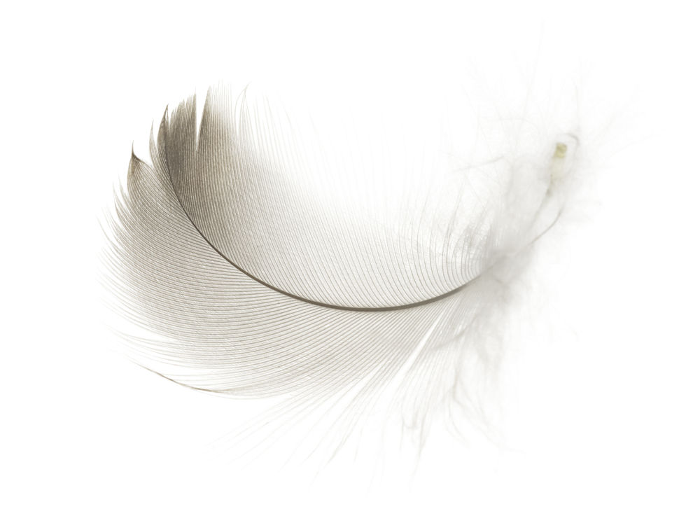 Black and white feather meaning