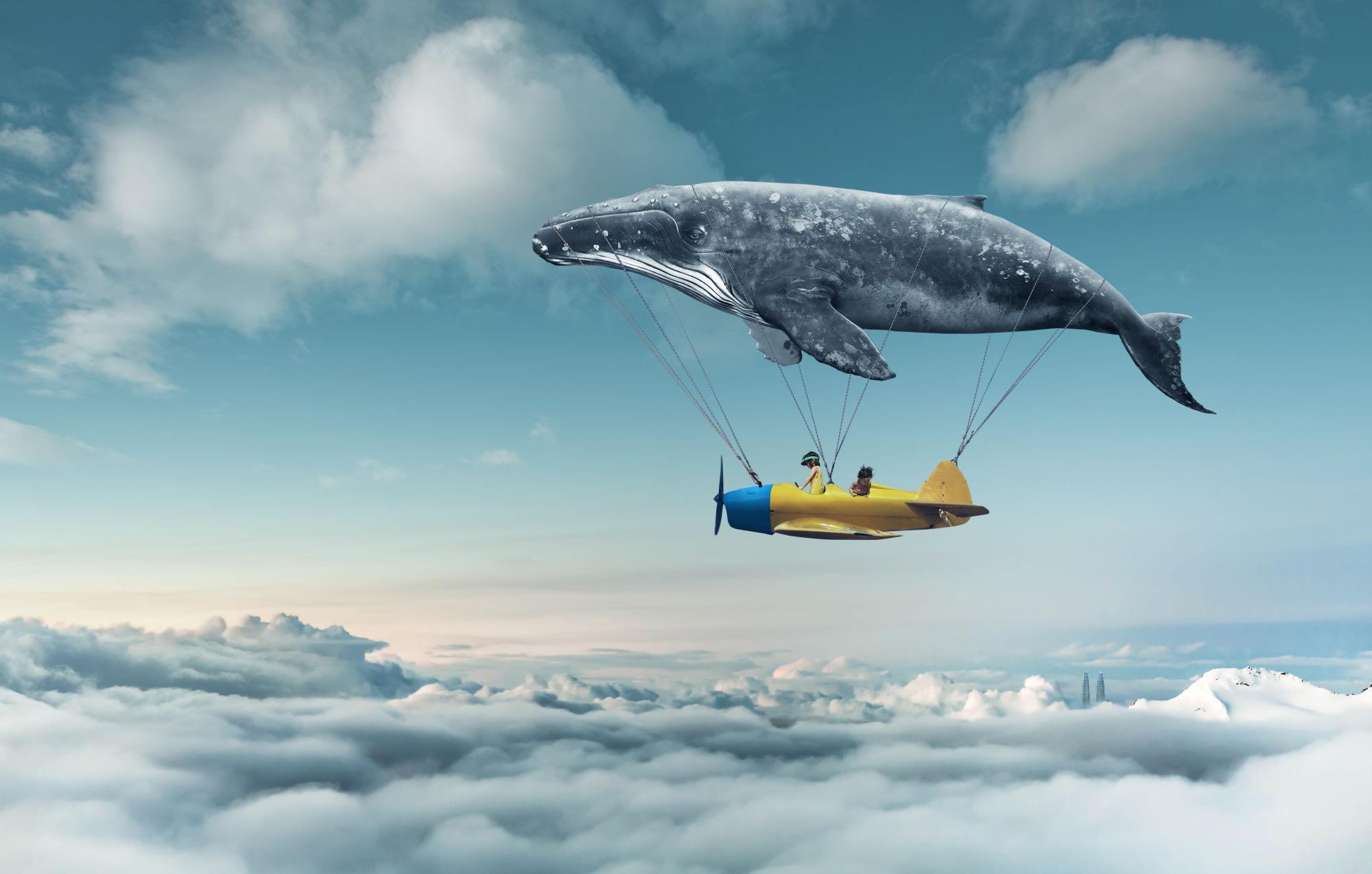 ballena volando