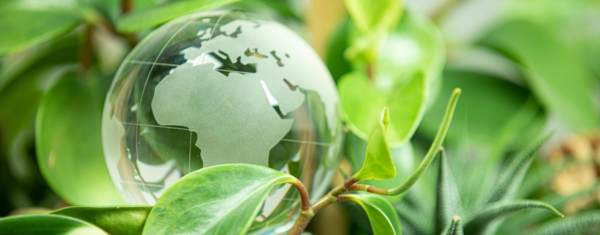 plantas y el planeta en forma de gota