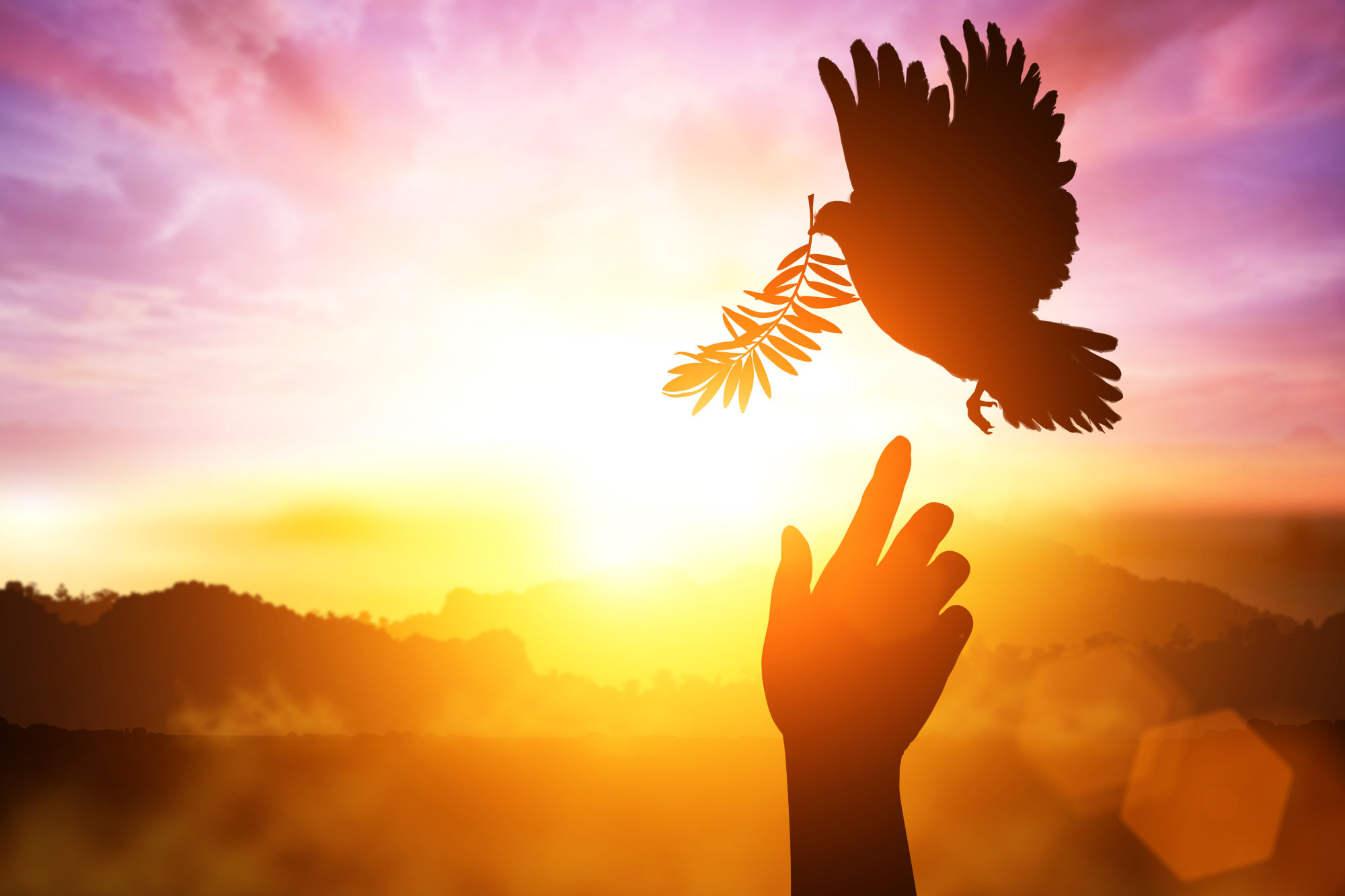 paloma volando con un laurel