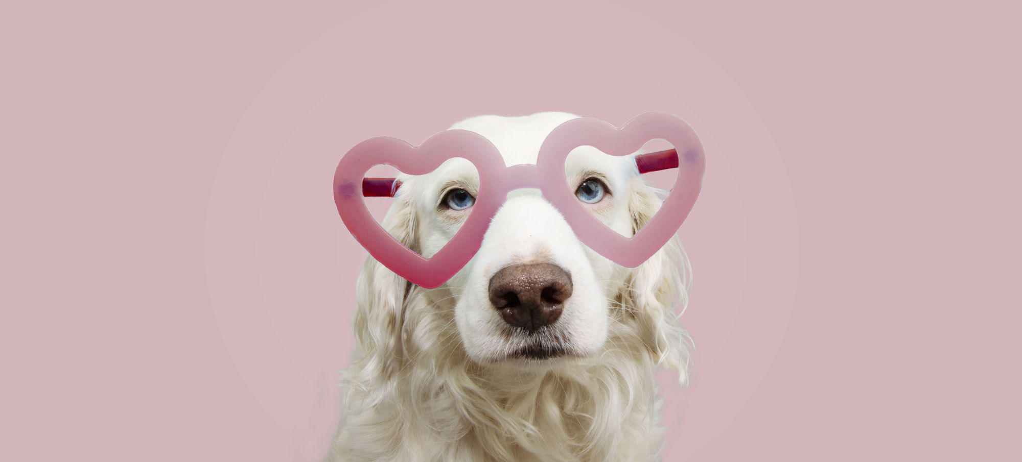 perrito con lentes en forma de corazon