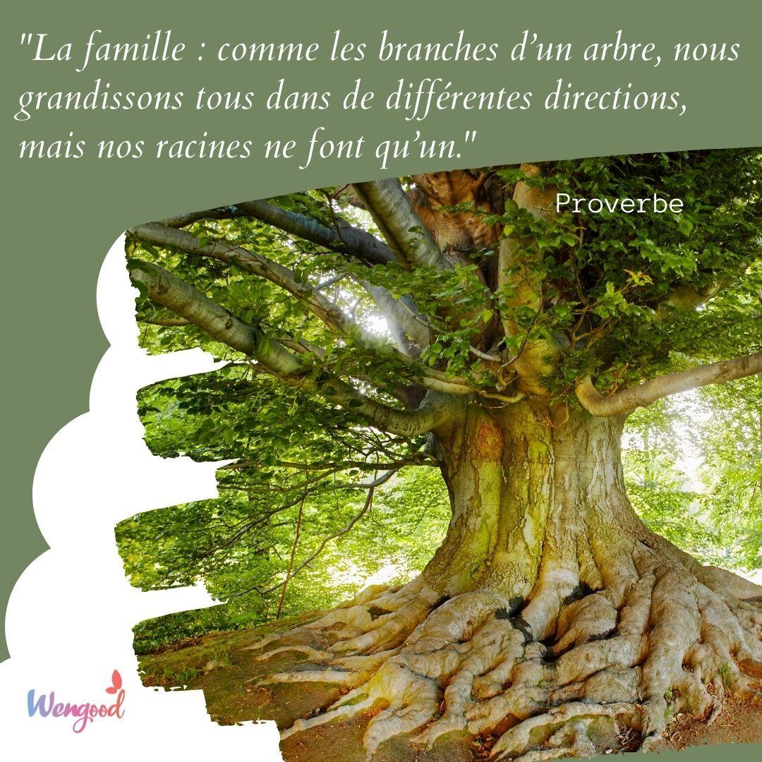 """""""La famille : comme les branches d'un arbre, nous grandissons tous dans de différentes directions, mais nos racines ne font qu'un."""" Proverbe"""